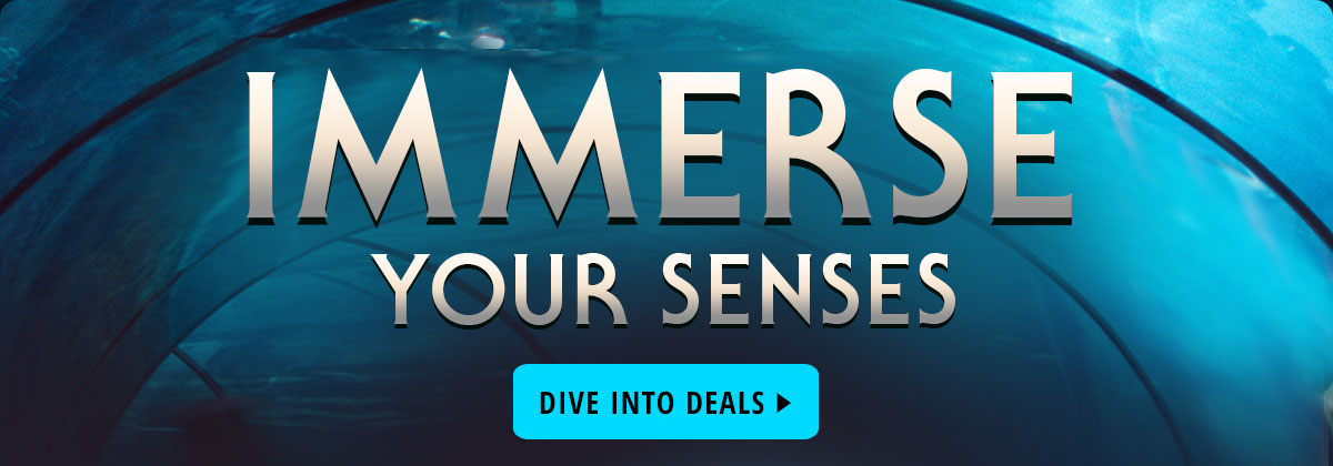 Immerse Your Senses